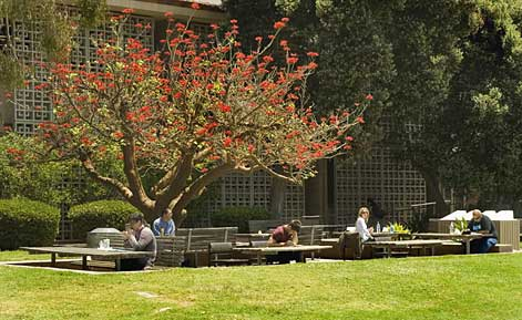 ucsb students having lunch on campus under a tree